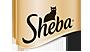 Sheba.